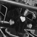 Kalverhouderij Herder Wijnjewoude