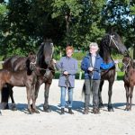 friese paarden, 1e premie veulens